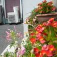 外の花たち
